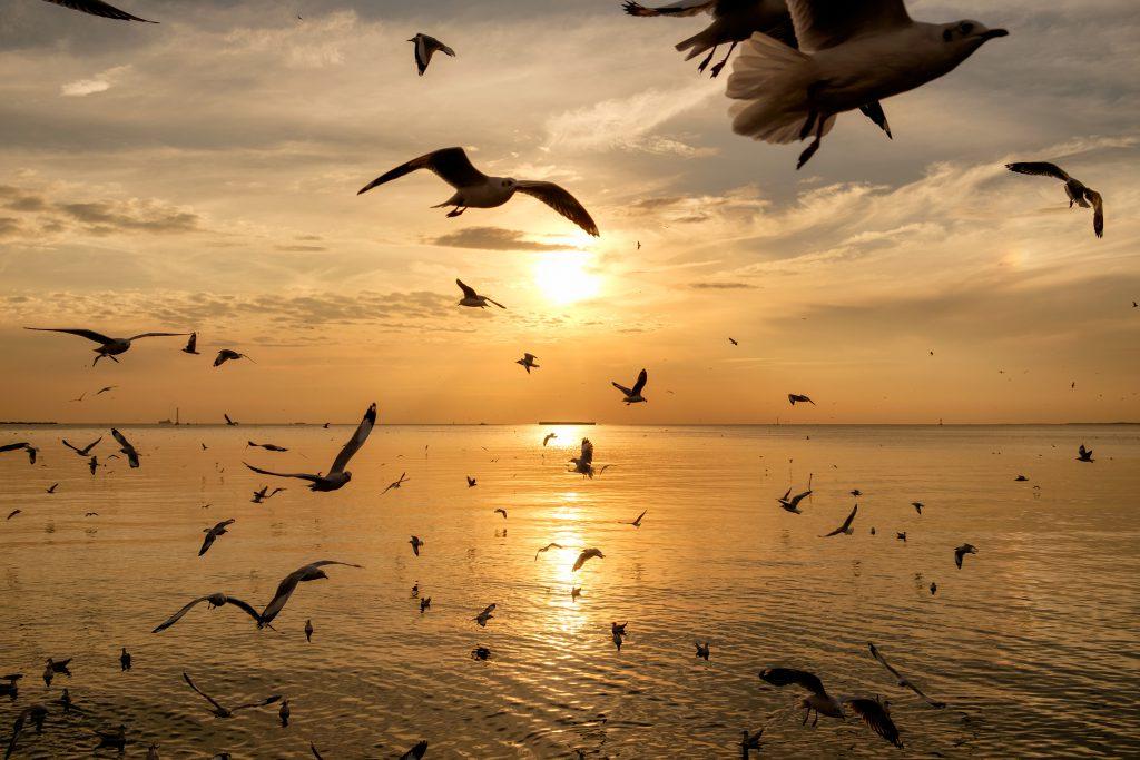 Aves migratorias Distivet
